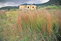 Native Grass Lawns and Xeriscapes - photos