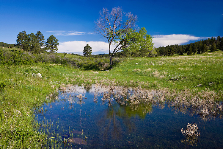 Pond on the rolling hills at Custer State Park, SD