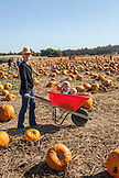 USA, Oregon, Bend, a mother wheels around her two kids as they sit inside a wheelbarrow at the annual pumpkin patch located in Terrebone near Smith Rock State Park