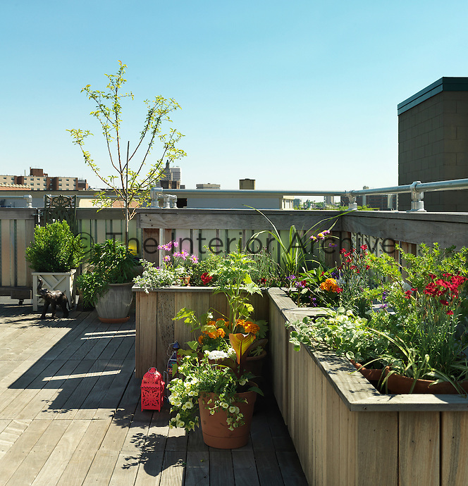 Raised wooden beds contain a variety of colourful plants, flowers and trees on this contemporary roof terrace