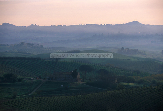 Misty morning over vineyards in Tuscany, Cetaldo, Italy