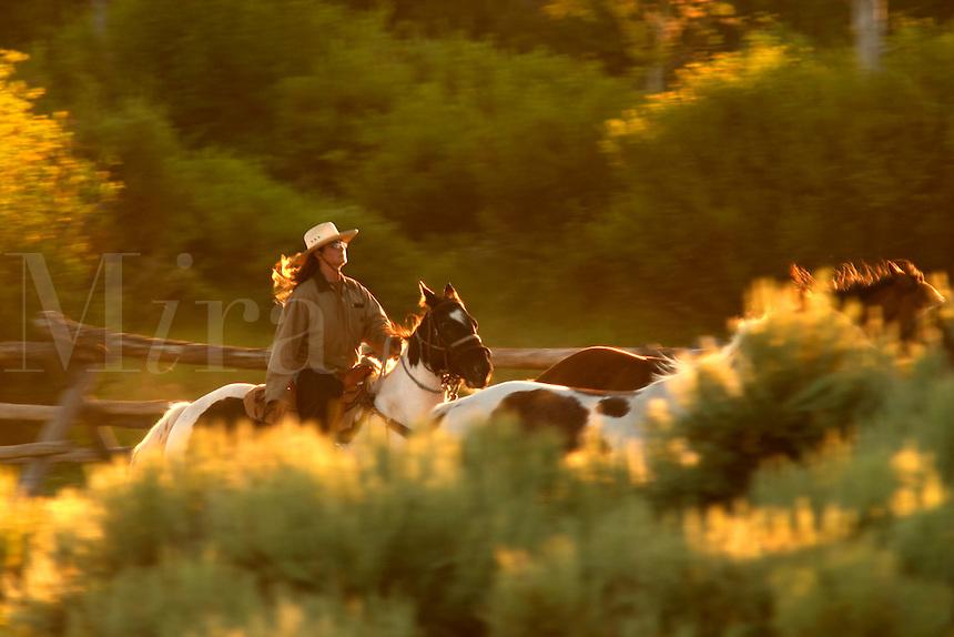 Woman on horseback rounding up horses, Triangle X Ranch, Grand Teton National Park, Teton County, Wyoming, USA
