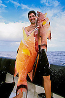 spearfisherman with good catches - hogfish, Lachnolaimus maximus, off Tampa, Florida, USA, Gulf of Mexico, Caribbean Sea,  Atlantic Ocean, Model Released - MR#: 000014
