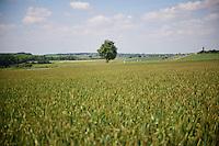 peloton racing through the rolling landscapes<br /> <br /> 2014 Belgium Tour<br /> stage 4: Lacs de l'Eau d'Heure - Lacs de l'Eau d'Heure (178km)