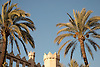 Palm trees, La Lonja in gothic style (1426-1447) by architect Guillermo Sagrera<br /> <br /> Palmeras, La Lonja (cat.: Sa Llotja) de estilo g&oacute;tico (1426-1447) por el arquitecto Gullermo Sagrera<br /> <br /> Palmen, Handelsb&ouml;rse La Lonja im gotischen Stil (1426-1447) von dem Architekten Guillermo Sagrera