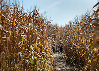 Lost in a corn maze in New York.
