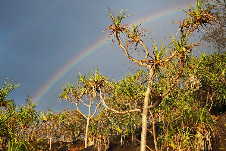 A rainbow above pandanus palms at Cape Tribulation.  Daintree National Park, Queensland, Australia