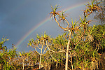 A rainbow above pandanus palms at Cape Tribulation.  Daintree National Park, Queensland, Australia