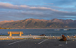 Seal enjoying the sunrise in Kaikoura waterfront car park on the east coast of the south island of New Zealand.