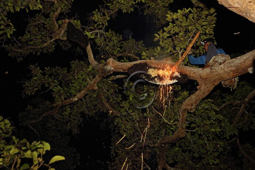 Boni, Hamsah's brother, is a daring climber who does not fear a few stings. The swarms are harvested at night to avoid the fury of the giant bees, which are disoriented by the darkness ///Boni le frère de Hamsah est un grimpeur audacieux qui ne craint pas quelques piqûres. Les essaims sont récoltés de nuit pour éviter la furie des abeilles géantes désorientées par l'obscurité.