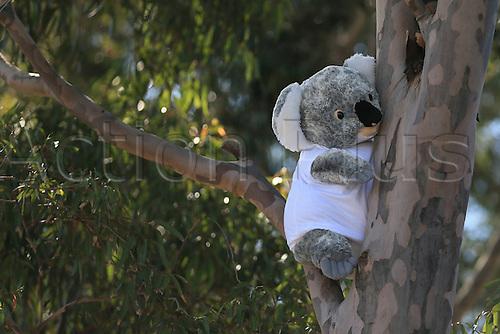 2016 F1 Grand Prix Australian Grand Prix Mar 17th. Melbourne Grand Prix Circuit, Albert Park, Melbourne, Australia.  A koala bear soft toy in a tree