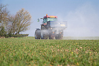 Spreading nitrogen onto winter wheat - Lincolnshire, March