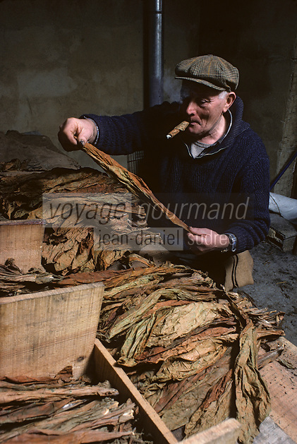Europe/France/Midi-Pyrénées/46/Lot/Haut-Quercy/Env Salviac : Triage du tabac<br /> PHOTO D'ARCHIVES // ARCHIVAL IMAGES<br /> FRANCE 1980