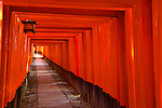 Kyoto City, Japan<br /> Walkway of torii (offering) gates at Fushimi Inari Shrine (Shinto)