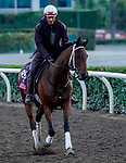 October 27, 2019 : Breeders' Cup Juvenile Fillies Turf entrant Croughavouke, trained by Jeff Mullins, exercises in preparation for the Breeders' Cup World Championships at Santa Anita Park in Arcadia, California on October 27, 2019. John Voorhees/Eclipse Sportswire/Breeders' Cup/CSM