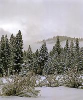 Snowfall Serria Nevada Mountains, Sierraville, California