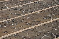 Cattle feedlot, southeastern Colorado. April 2013. 84760