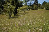 Flora - Bloemen en Planten | Flowers and Plants