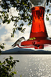 Humming Birds at feeder with lake background.