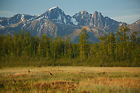 Summer Landscape of Palmer Hayflats Refuge with Sandhill Crane pair and Twin Peaks of Chugach Mountain Range  Southcentral, Alaska<br /> <br /> <br /> (C) Jeff Schultz/SchultzPhoto.com