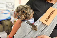 MANHATTAN ,NEW YORK, USA -JUNE 02:   Dog  adopted at  Best Friends Pet Super Adoption that held its annual adoption event bringing together more than twenty pet rescue organizations  and hundreds of dogs and cats into contact with people seeking to open their hearts & homes to an animal in need on June 2, 2017 in New York. Joana Toro/VIEW press