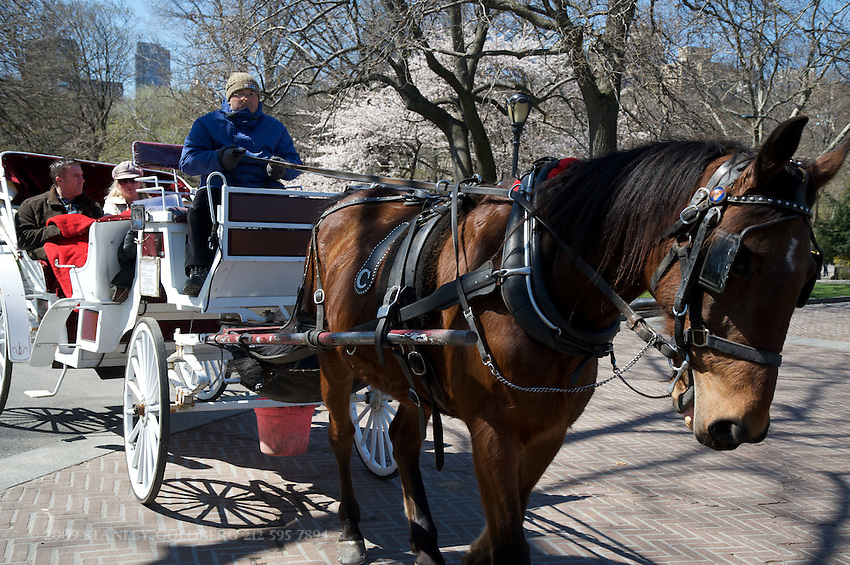 Horse Drawn Carriage is a Tradition in Central Park