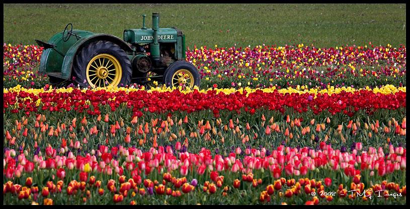 Tulip Tractor<br /> Woodburn, Oregon