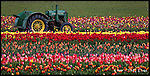 Tulip Tractor<br />