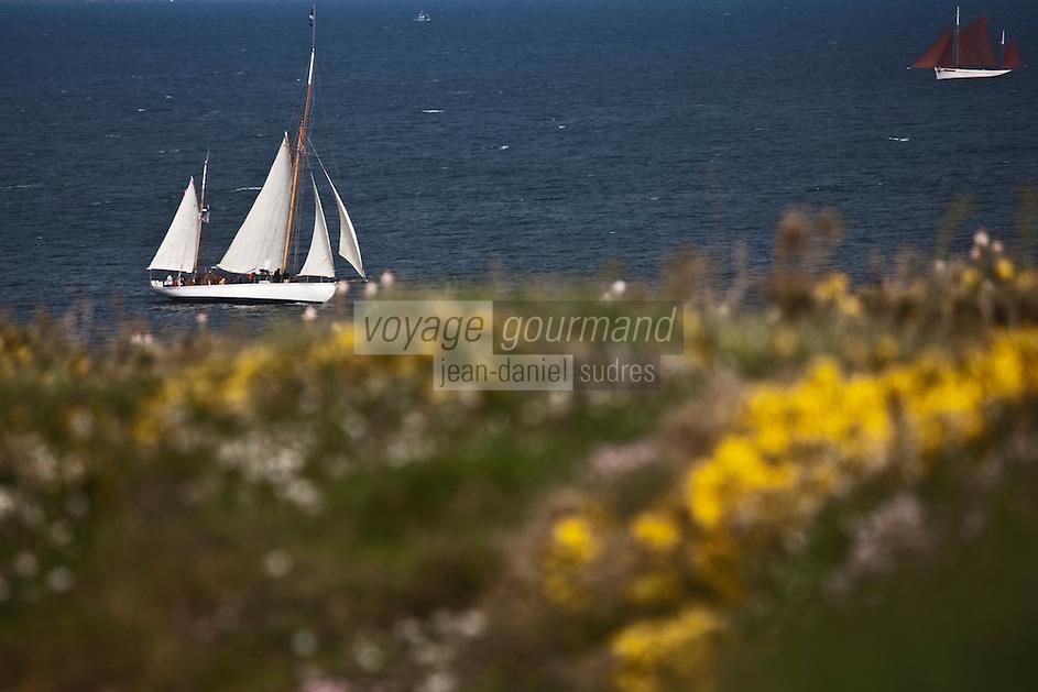 Europe/France/Bretagne/56/Morbihan/ Belle-Ile-en-Mer/Sauzon: vieux gréements devant la lande d'ajoncs à la Pointe de Kerzo