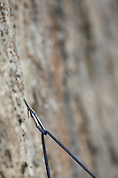 carabiner, climbing Rope, Granite wall, Rock Climbing, Jackson Hole, Wyoming