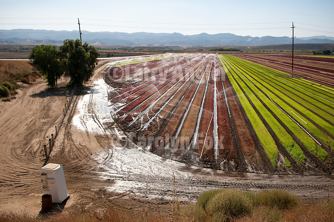 Outhouse by the irrigated red and green lettuce field in the Salinas Valley of Calif.