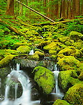 Olympic National Park, WA<br /> Small stream flows over moss covered rocks through an old growth hemlock forest in the upper Soleduck Valley