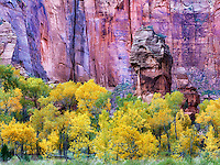 The Pulpit and fall color at the Temple of Sinawava. Zion National Park, Utah
