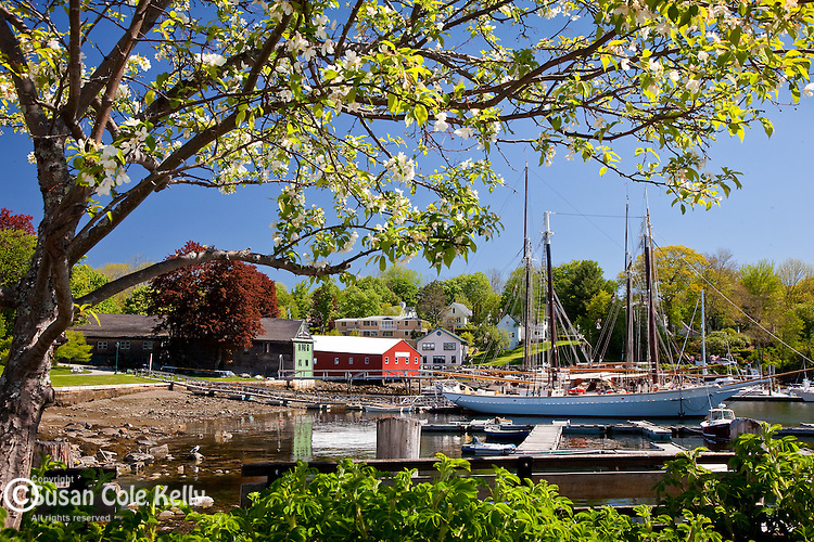 Springtime in Camden Harbor in Camden, ME, USA