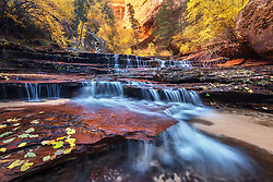 A cascade over sandstone in the wilderness of Zion National Park at the peak of autumn color. <br />