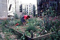 Woman works on her plot in the East Eighth St. community Garden in 1995. (© Richard B. Levine)