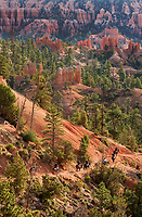 730750169v early morning lights up the hoodoos as tourists on horseback begin the descent into the canyon in this view from sunrise point in bryce canyon national park utah united states