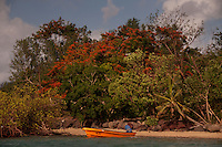 "Flamboyant ""Christmas"" Tree and Orange Skiff, Turtle Island, Yasawa Islands, Fiji"