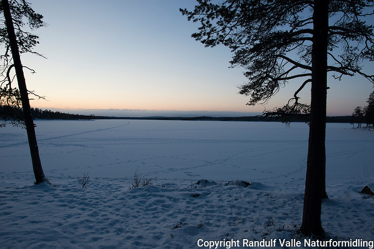 Svartbrysttjern i Pasvik i mørketida. ----- Winter in Pasvik.