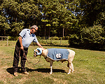 July 31, 2017. Chapel Hill, North Carolina.<br /> <br /> Don Basnight pets Rameses the Ram on a tether outside the barn in which he lives. <br /> <br /> Basnight is one of the members of the Hogan family who have long been the caretakers of Rameses the Ram. The current Rameses is the 21st in the line of the University of North Carolina's live mascot.