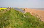 Shingle beach bar and lagoon formed by north to south longshore drift at Bawdsey, Suffolk, England