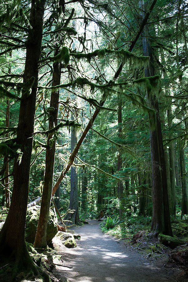 Olympic National Park, Washington State, WA, USA