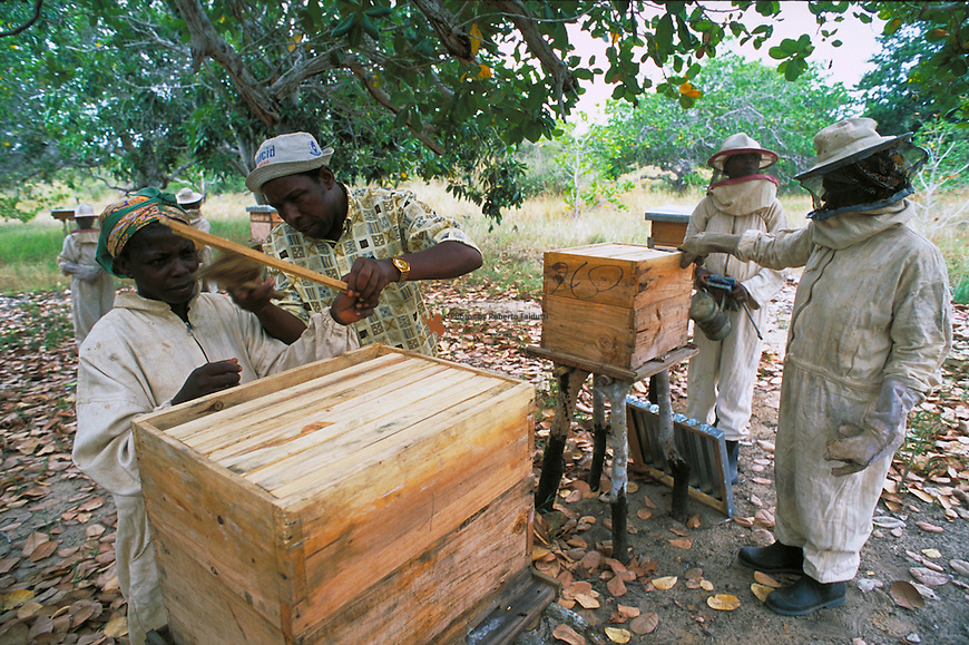 Project extensionist  shows  to  trainees  the functioning of an improved hive