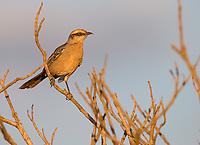 We saw numerous bird species in the savannas of Emas National Park.