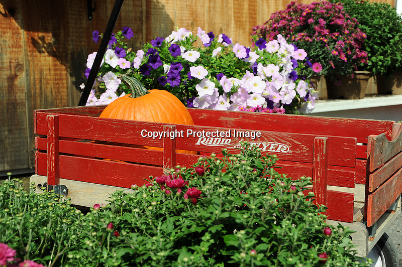 Wagon and Pumpkin and Flowers at Apple Orchard in Vermont USA