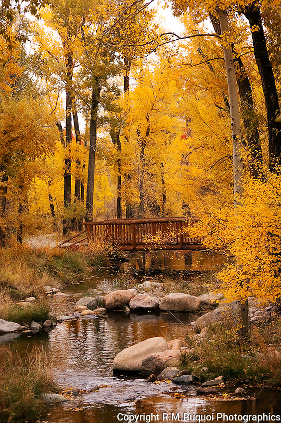 Fall Color in Colorado