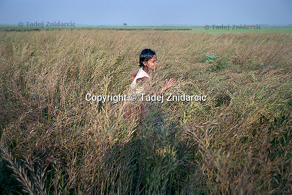 Female student from a boat school runs through a wheat field behind her village of Kalinagar. (Photo by Tadej Znidarcic)