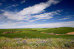 As the Palouse country of Washington drops to the Snake River, many back roads produce peaceful views.