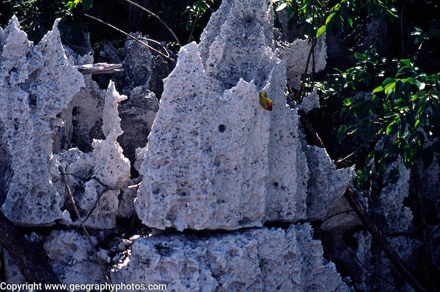 Chemical weathering carboniferous limestone, Cayman Brac, Cayman Islands, British West Indies,