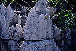 Chemical weathering carboniferous limestone, Cayman Brac, Cayman Islands, British West Indies,